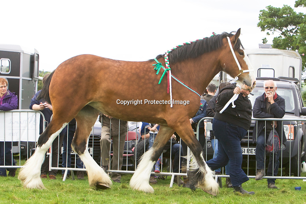 R &amp; S Cockfroft's Mare  SPRINGWELL HARTCLIFFE ADELE<br /> Sire  Boothray Richard
