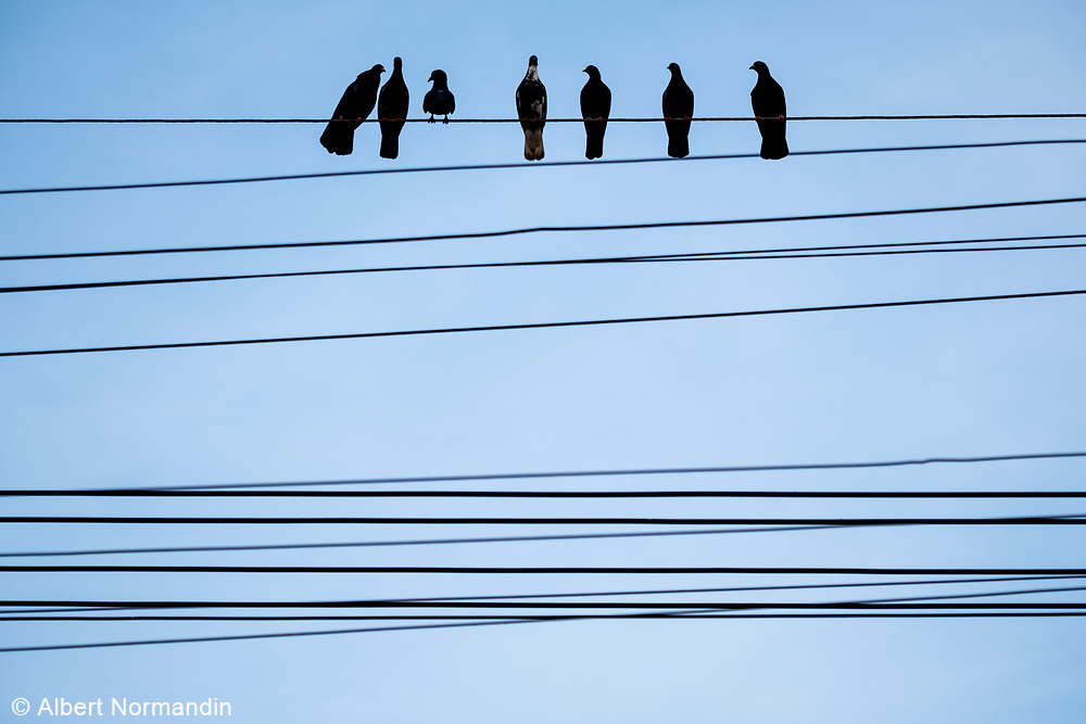 Birds on a wire, Mawlamyine, Myanmar
