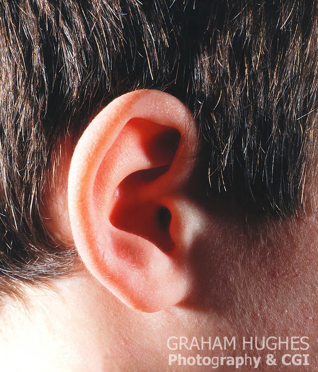 Close up of boys ear.