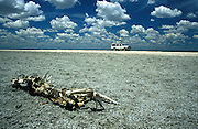 Namibia, Etosha National Park. 4x4 vehicle drives past carcas or skeleton on a dead giraffe..©Zute Lightfoot.DVD0019