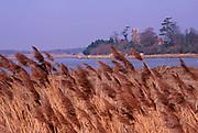 A87DH2 Water reeds River Alde looking towards Iken church Suffolk England