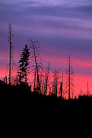 Silhouette of trees in Yosemite National Park, CA.<br />