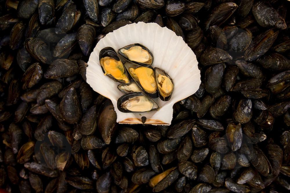 Frankrijk, France, Normandie, Le Treport, 16 oktober 2008 20081016 Foto: David Rozing Franse badplaats Le Treport, Paris plage, mosselen in vishal.French village Le Treport at the normandian coast, mussels for sale..Foto: David Rozing
