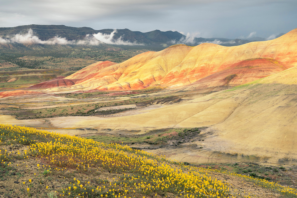 View of the Painted hills with Golden Bee Plant (Cleome platycarpa) blooming on clay slopes. Painted Hills Unit of John Day Fossil Beds Natiional Monument Oregon