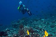 Scuba Diving Fish Rain, Molokai Hawaii