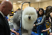 Westminster Kennel Club Dog Show - 2015