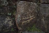 Mongolia. petroglyphs in Tashgait    Humorit Sum       / Pétroglyphes à TASHGAIT. / Les pétroglyphes, dont l'origine remonte au paléolithique, se sont largement répandus durant la période de l'âge du bronze et du fer. La Mongolie en possède une très grande quantité, répartie principalement au centre et à l'ouest du pays. Ces gravures sur rochers bruns représentent la plupart du temps des animaux sauvages ou domestiques, mais également des chasseurs et cavaliers. Ceux photographiés laissent apparaitre des bouquetins, un cavalier (rocher inférieur) et un cerf (rocher médian).... (20 km à l'Est du Sum de QOQMORIT dans l'aymag de GOV ALTAY,  / /12    L920718a  /  P0002617