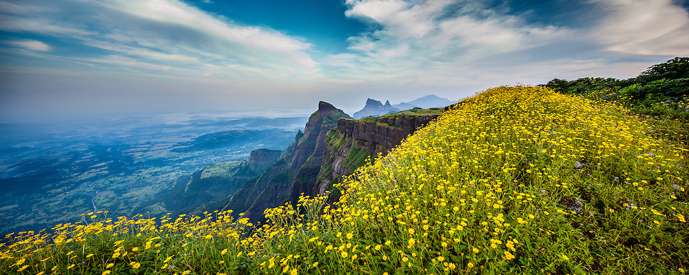 Natural marvel, the western cliff of Mount Harishchandragad, popularaly known as &quot;KOKAN-KADA&quot;,  sonaki flowers are in full bloom during monsoon,<br /> The north Western Ghats of India, very reach in bio diversity, the lateritic plateau allows many species of grass and small water plants to grow during the monsoon. Maharashtra, India.