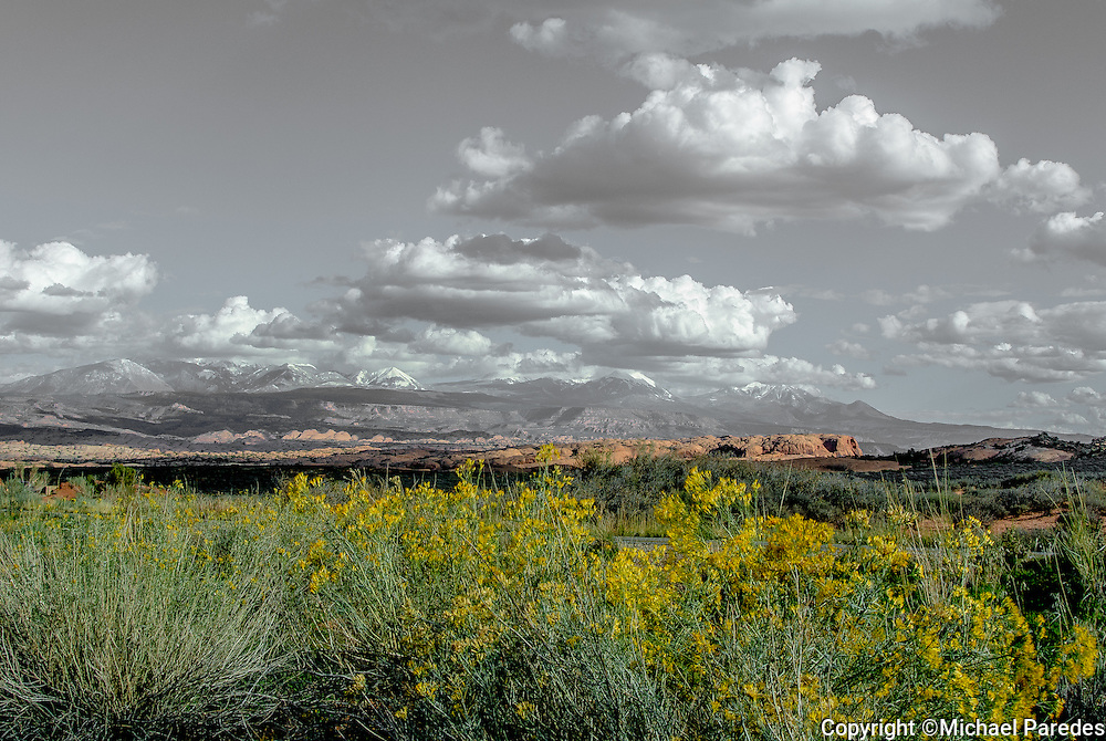 Wildflowers bloom in the desert of Arches National Park, Utah.