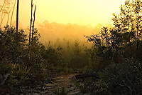 Dawn in the Ocala National Forest, Marion County, Fl.