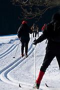 Skilangläufer, Langlauf Loipe, verschneiter Winterwald, Schnee, Winter, Harz, Niedersachsen, Deutschland | cross country ski track, forest,  snow, winter, Harz, Lower Saxony, Germany