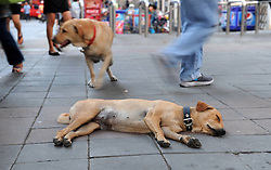 A street dog rests by the street side in Bangkok, capital of Thailand, March 7, 2013. A foundation for stray dogs in Bangkok said the city has around 700,000 stray dogs., March 7, 2013.. Photo by Imago / i-Images...UK ONLY..Contact..Andrew Parsons: 00447545 311662.Stephen Lock: 00447860204379