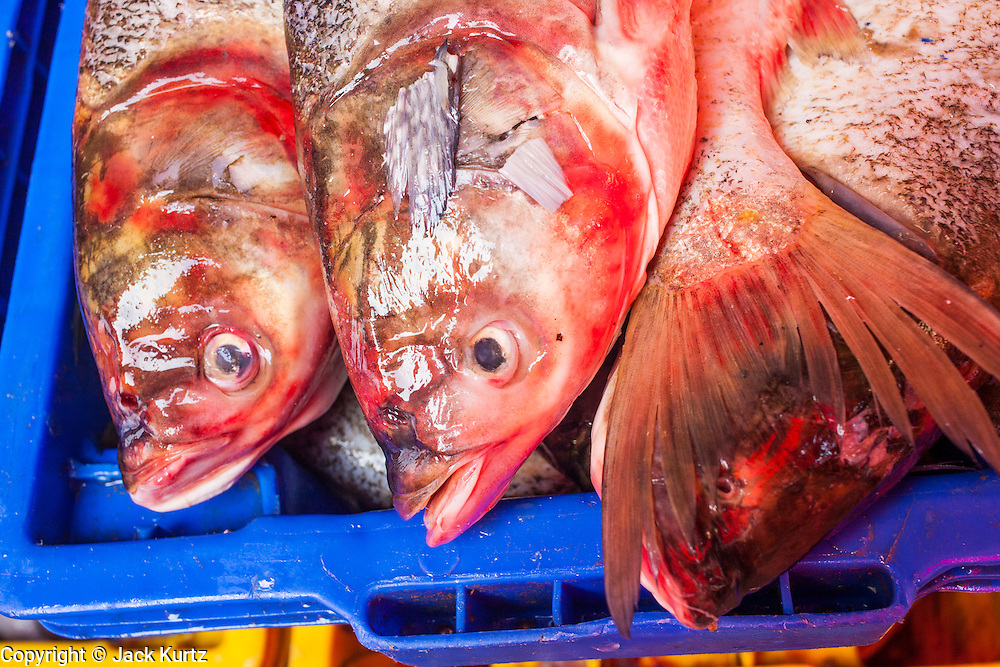 """26 SEPTEMBER 2012 - BANGKOK, THAILAND: Fresh fish for sale in Khlong Toey Market in Bangkok. Khlong Toey (also called Khlong Toei) Market is one of the largest """"wet markets"""" in Thailand. The market is located in the midst of one of Bangkok's largest slum areas and close to the city's original deep water port. Thousands of people live in the neighboring slum area. Thousands more shop in the sprawling market for fresh fruits and vegetables as well meat, fish and poultry.     PHOTO BY JACK KURTZ"""