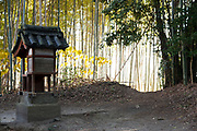 bamboo forest at the Yakushiji Temple complex in Nara Japan