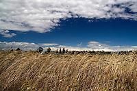 Oria, la campagna nei pressi della Masseria Salinelle