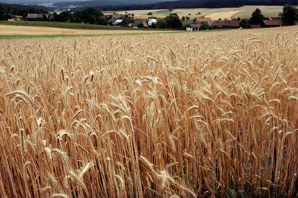 Wheat field with town in the background. Czech-German border.