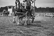 2011-6-25-Draft Horse Hitch Show.