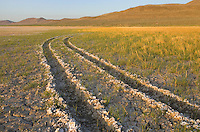 Tire tracks in dry lakebed, Alvord Desert Oregon