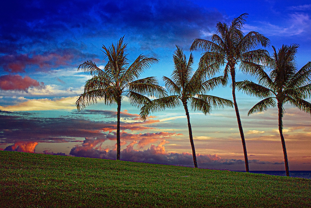 Palm trees silhouetted against the sunset over the ocean in Hawaii