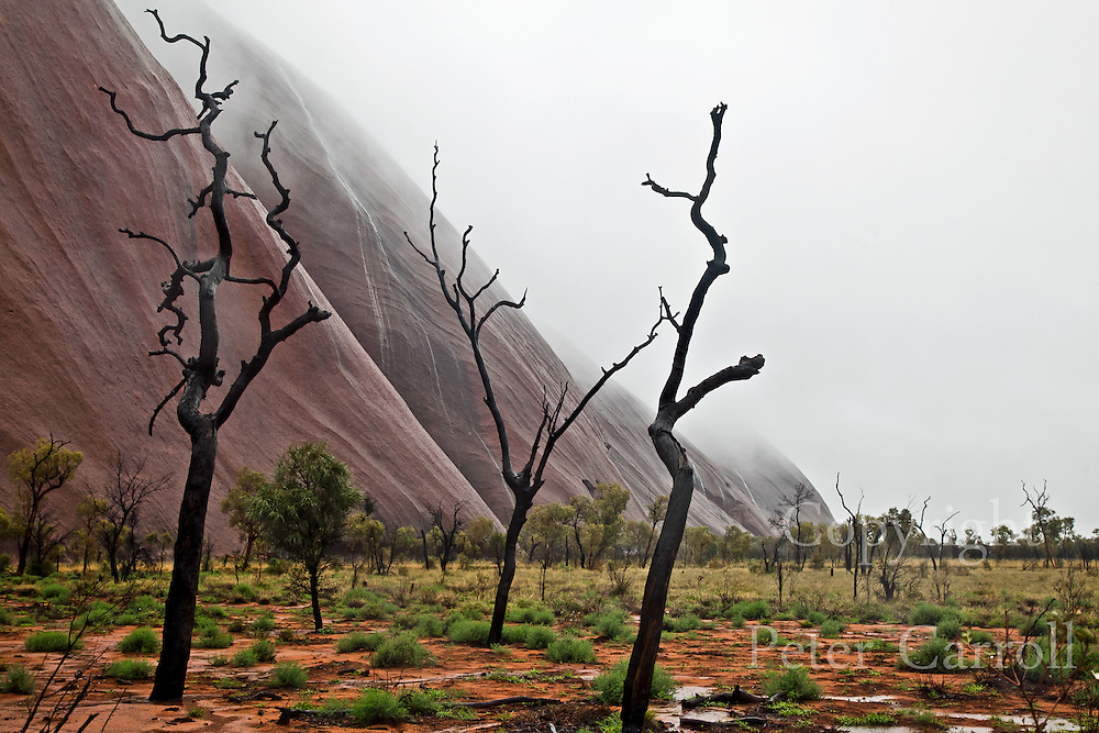 Heavy cloud rests on Uluru as streams of water pour down the flanks of the red rock. <br /> Uluru rises from spinifex and Mulga desert plains about 450km south west of Alice Springs