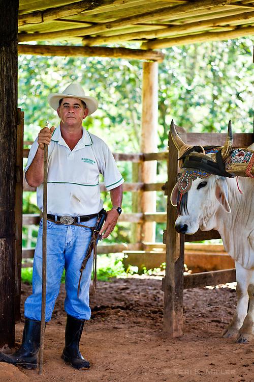 A man and his ox grind sugar cane in Santa Juana, Costa Rica