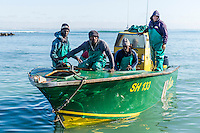 Small-scale commercial fishermen returning to harbour in their ski-boat, Struisbaai, Western Cape, South Africa