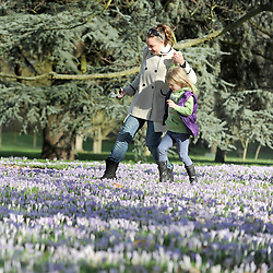 ©London News pictures. 14.02.2011. Jodie Thompson and young friend Ruthie,7,  (surname not supplied) tiptoe carefully through the crocuses covering the ground at Kew Gardens.  People enjoy the sunshine in Kew Gardens, London, today (Mon) after a weekend of rain and cloud. Picture Credit should read Stephen Simpson/LNP