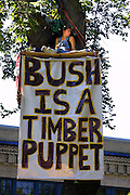 Tree sitter Jill (no last name given) with the Cascadia Forest Alliance, relaxes above the protest crowd in a perch above the Park Blocks. She was part of May Day protests and made her opinion known about President George W. Bush.