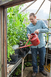 Watering plants on a greenhouse bench including tomatoes and peppers