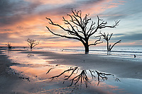 Coastal trees along South Carolina's Edisto Island reflect into tidal pools during the first light of morning at Botany Bay's Boneyard Beach.  Rising sea levels and coastal erosion led to this beautiful situation where The Atlantic Ocean interacts with the remains of mature coastal trees.  Unfortunately, the trees pictured here are no longer standing; storms and strong seas have laid them down.