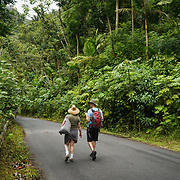 RIO GRANDE, PUERTO RICO -- FEBRUARY 1, 2019: <br /> Tourists walk down the El Yunque National Rain Forest main road to the Quebrada Juan Diego (Juan Diego Creek). A few of the rain forest's popular trails and attractions are still not open to the public more that one year after Hurricane Maria's path through Puerto Rico.<br /> (Photo by Angel Valentin)