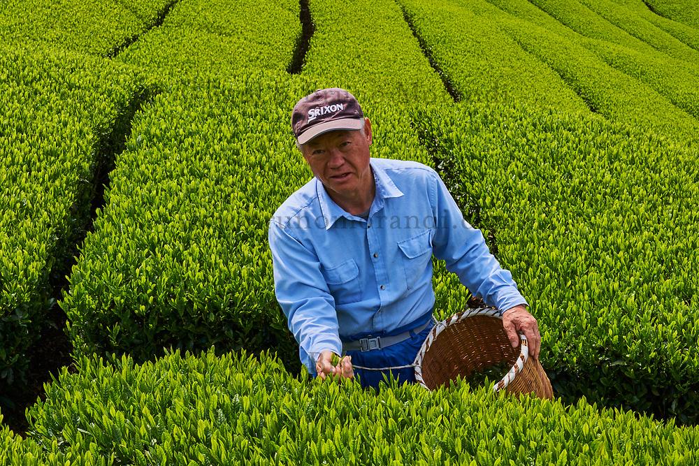 Japon, île de Honshu, région de Shizuoka, champs de thé, Mr Okazawa Hiromasa // Japan, Honshu, Shizuoka, tea fields, Mr Okazawa Hiromasa