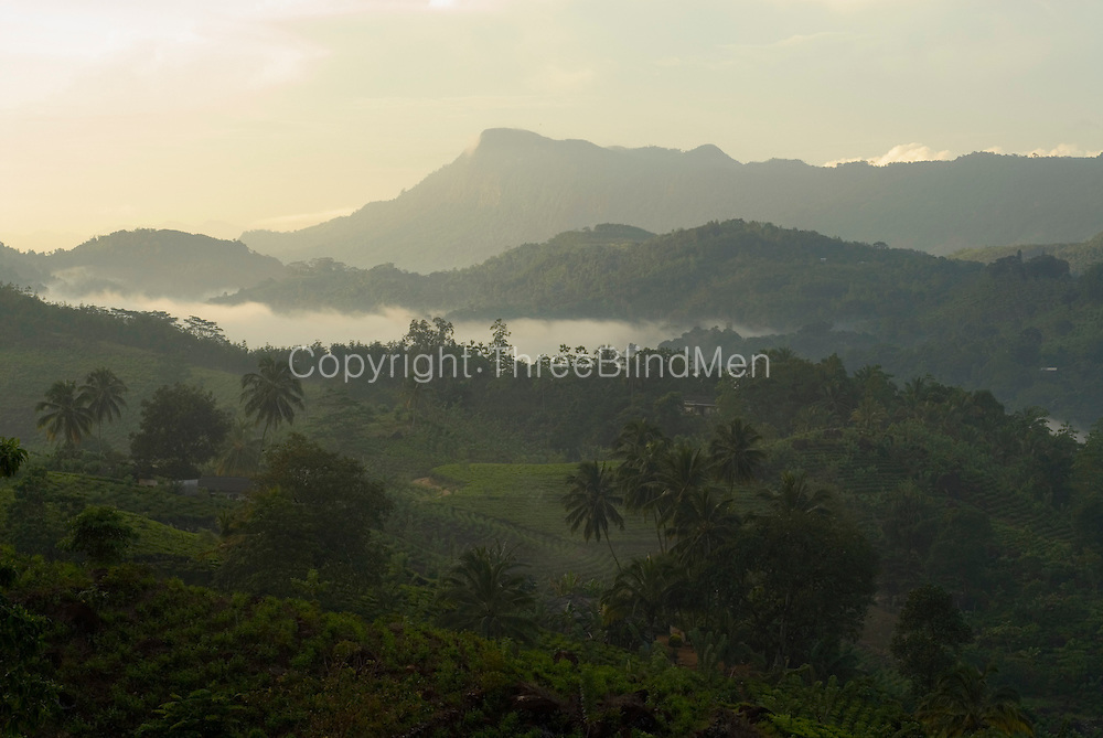 View over hills driving towards Hapugatenne from Ratnapura. Coconut, tea, and rubber plantations.