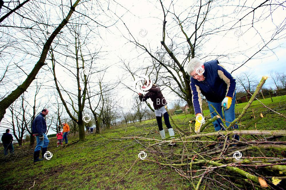 BRUCHEM - In de Kersenboomgaard Ben en Cherry's is een Sprokkeldag georganiseerd. Vrijwilligers helpen met het snoeien en verzamelen van het snoeihout van de Kersenbomen. FOTO LEVIN DEN BOER - PERSFOTO.NU