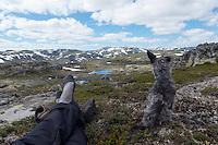 Dog and man in the mountains