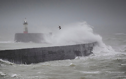 © Licensed to London News Pictures. 14/01/2020. Newhaven, UK. High tides and strong winds bring huge waves onto the breakwater at the entrance to Newhaven harbour in East Sussex. The effects of storm Brendan are still being felt throughout the UK. Photo credit: Peter Macdiarmid/LNP