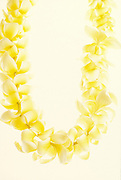 Plumeria flower lei, Hawaii<br />