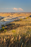 Mixed grass prairie grasses. Badlands National Park South Dakota