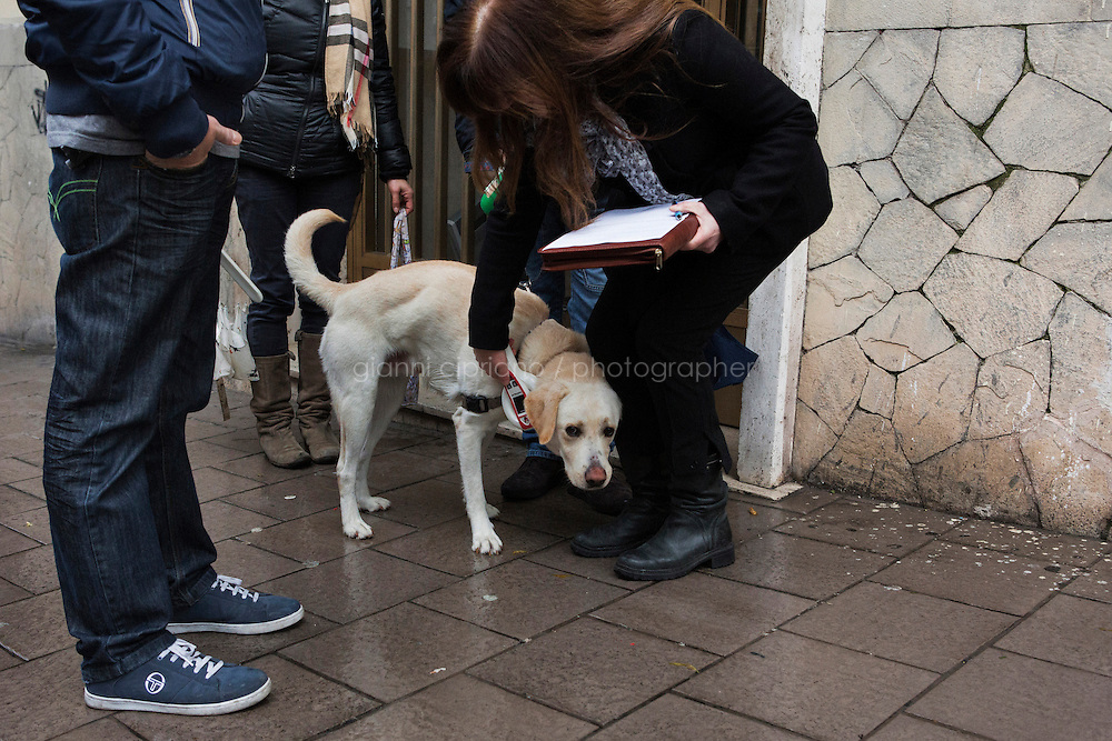 NAPLES, ITALY - 23 January 2014: Maria Rosario Tommaso, of the Naples Health Department, check a Labrador named Pluto with a microchip detector duringn an identity check and to make sure the owner carries a bag and shovel to pick up the dog faeces, in the Vomero-Arenella neighborhood, where a pilot project to keep streets clean from dog excrements was started, in Naples, Italy, on January 23rd 2014.<br /> <br /> The city of Naples started a pilot project in the district of Vomero-Arenella aimed at busting irresponsible dog owners from leaving their pets' feces in the street. Blood samples are being collected from the approximately 8,000 dogs living in the neighborhood of 110,00 inhabitants. (the city of Naples counts a total of 960,000 people and 60,000 dogs). In a few months city street cleaners  will locate the excrements, call the police who will send a sample to a laboratory where DNA will be extracted and compared with the results of blood samples.