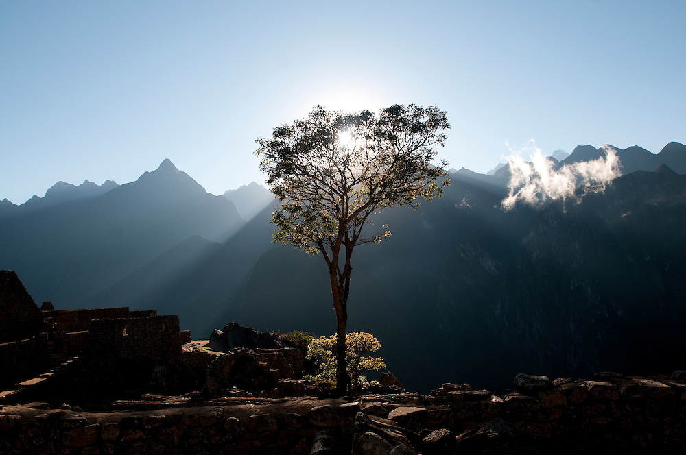 The sun of the winter solstice rises behind the tree in Machu Picchu named Pisonay.  These trees have a tradition in Cusco, Peru, and are planted in various plazas of various towns in the region.  The tree signifies all the generations of the inhabitants of the town in which it grows.