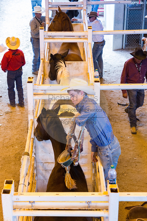 Cowboys prepare their broncos during the Cheyenne Frontier Days rodeo July 25, 2015 in Cheyenne, Wyoming. Frontier Days celebrates the cowboy traditions of the west with a rodeo, parade and fair.