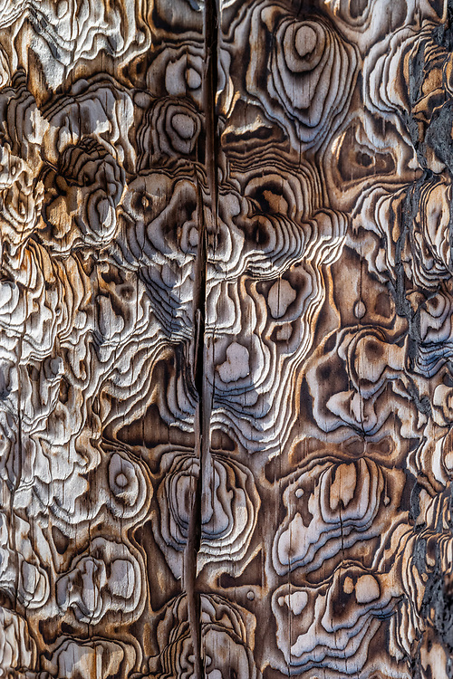 Abstract patterns of tree bark in the Teton backcountry near Jackson, Wyoming.