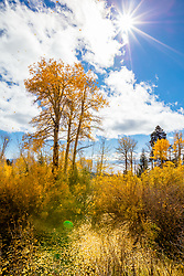 """""""Raining Sunshine 2"""" - Photograph of yellow Aspen leaves falling from the trees above Lake Tahoe in Autumn."""