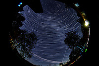 Star Trails looking Up (19:28-20:29). Composite of images  taken with a Nikon D850 camera and 8-15 mm fisheye lens (ISO 800, 10 mm, f/5.6, 30 sec)