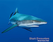 Full of spectacular underwater photographs and engaging, informative text, Shark <br />