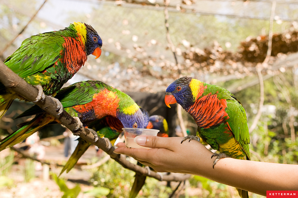 Exotic birds at the Jacksonville Zoo.