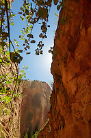 Hanging plants near Weeping Rock, Zion National Park, located in the Southwestern United States, near Springdale, Utah.