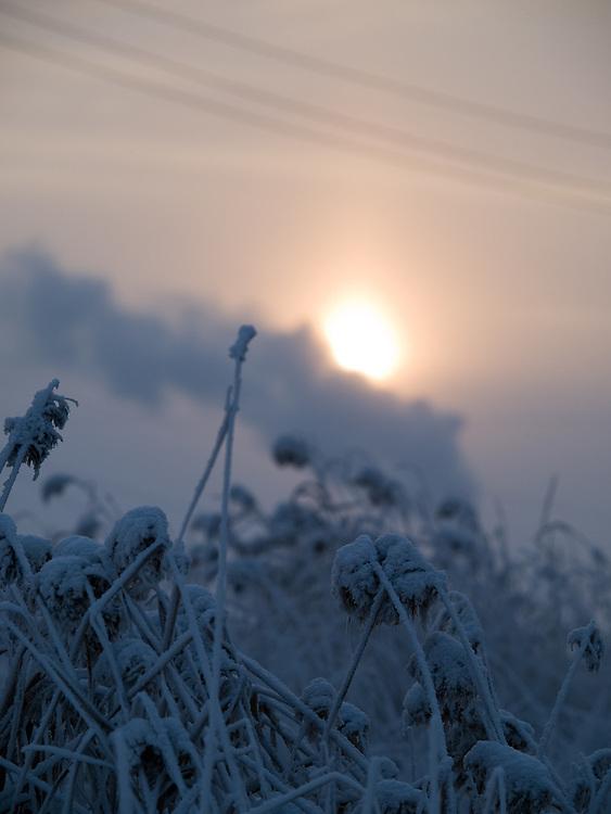 Sonnenaufgang in einer sibirische Winterlandschaft in der N&auml;he der Stadt Jakutsk. Jakutsk wurde 1632 gegruendet und feierte 2007 sein 375 jaehriges Bestehen. Jakutsk ist im Winter eine der kaeltesten Grossstaedte weltweit mit durchschnittlichen Winter Temperaturen von -40.9 Grad Celsius. Die Stadt ist nicht weit entfernt von Oimjakon, dem Kaeltepol der bewohnten Gebiete der Erde.<br /> <br /> Sunrise in a Siberian winter landscape close to the city of Yakutsk. Yakutsk was founded in 1632 and celebrated 2007 the 375th anniversary - billboard announcing the celebration. Yakutsk is a city in the Russian Far East, located about 4 degrees (450 km) below the Arctic Circle. It is the capital of the Sakha (Yakutia) Republic (formerly the Yakut Autonomous Soviet Socialist Republic), Russia and a major port on the Lena River. Yakutsk is one of the coldest cities on earth, with winter temperatures averaging -40.9 degrees Celsius.