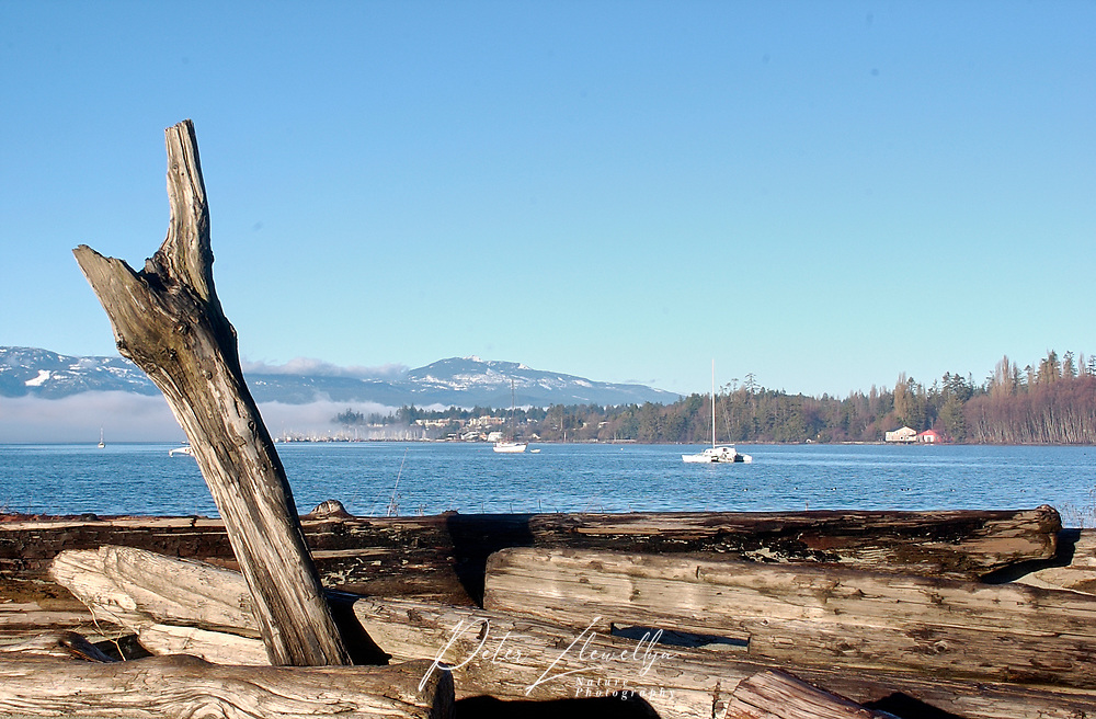 Driftwood and inner side of Goose Spit   Photo: Peter Llewellyn