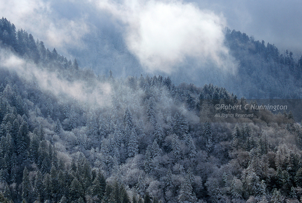 A spring ice storm blankets the conifers on the Newfound Gap road, Great Smoky Mountains National Park, Tennessee.